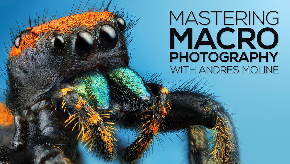 [SUPER HOT SHARE] Andres Moline – Fstoppers – Mastering Macro Photography Download